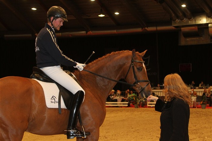 Dyreste auktionshest / most expensive auction horse: Overgaard's Zacksu