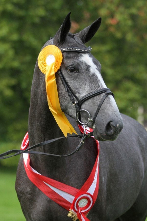 "Årets springbetonede hoppe ""Bøgegårdens Quintana"" Champion jumping mare of the year."