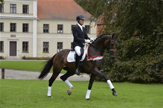 Dressage Mare of the Year 2014 and gold medal mare, Lillevangs Pari-Diva by Blue Hors Zack.