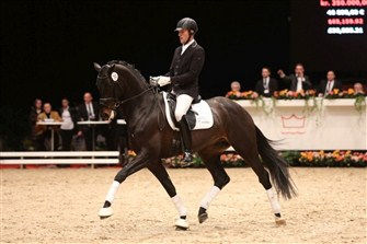 Premium stallion JJ Zinfandel Grønvang sold for 450,000 DKK.