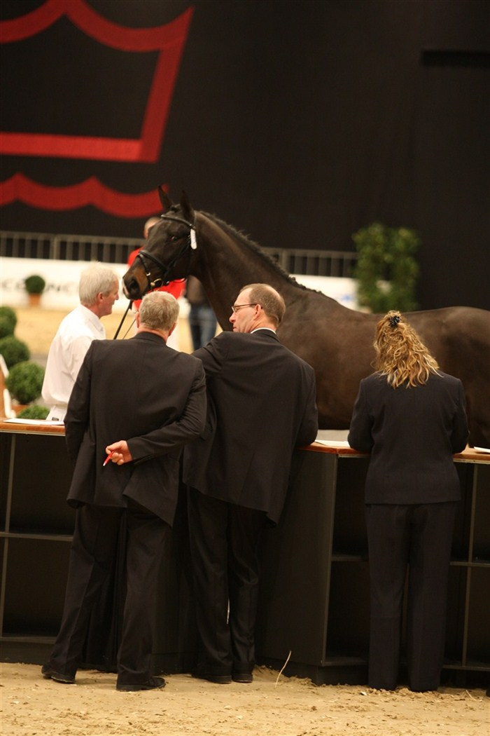 Dansk Varmblods dommere skal bedømme omkring 100 hingste under kåringsforløbet.