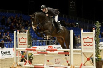 4-year-old jumping champion stallion Balou.