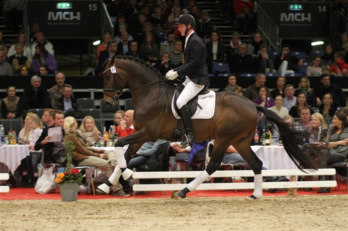 Anden dyreste auktionshest / second most expensive auction horse: Netstutteriets Bachio.